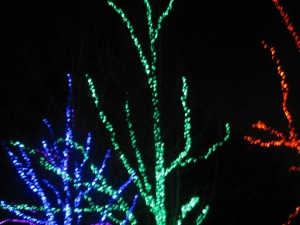 Zoolights and misc. 12-2011 011