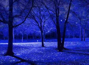 286002__blue-night-trees_p