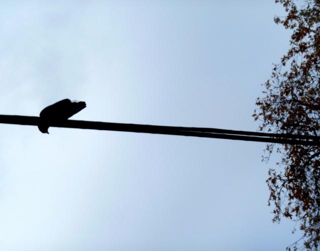 Crow, etc. Irvington 011