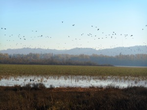 Oregon, Early Winter