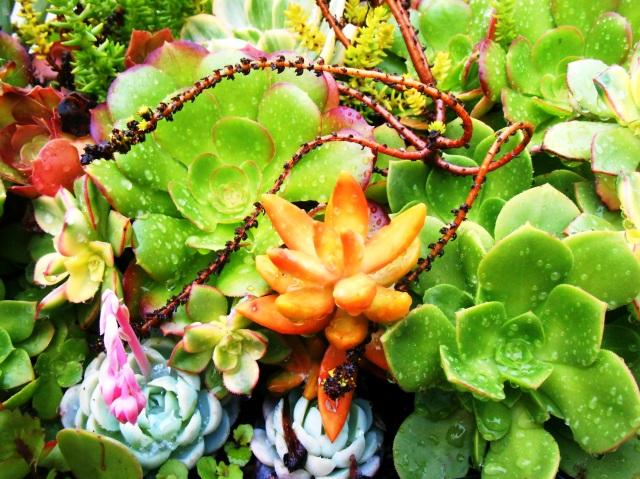 Such succulents!