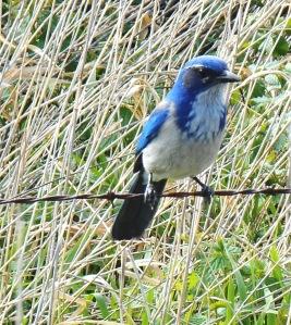 Steigerwald birds and such 3-16 049