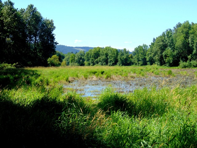 Sauvie Island and other 055
