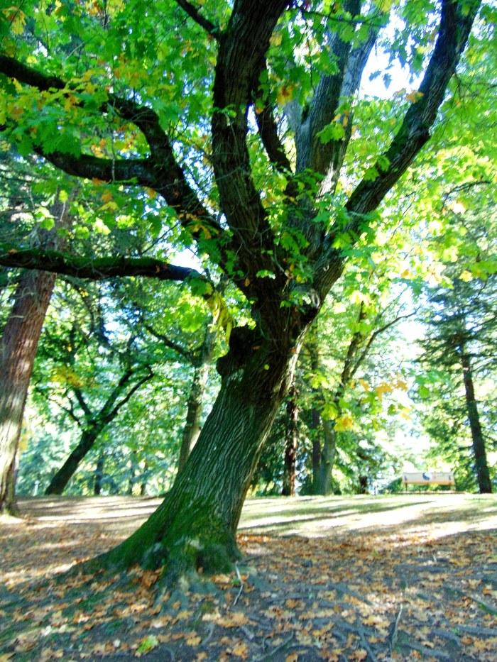 l-park-for-blog-055