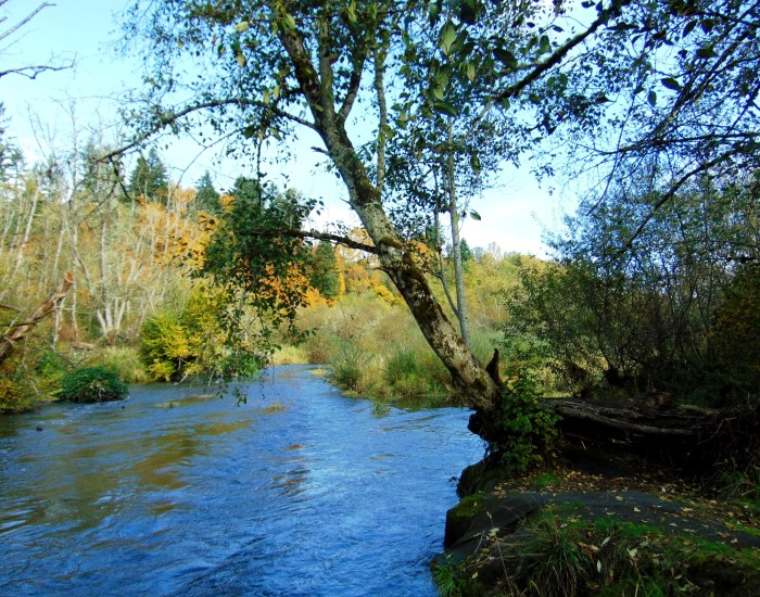 salmon-creek-in-fall-028