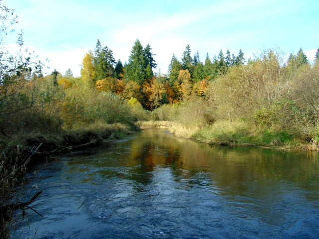 salmon-creek-in-fall-105