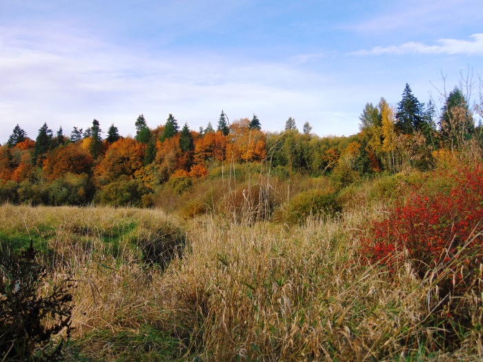 salmon-creek-in-fall-126