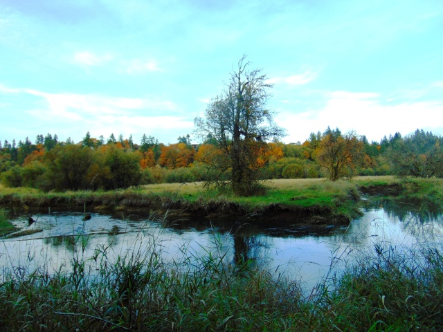 salmon-creek-in-fall-211