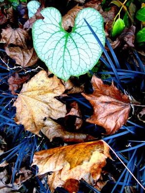 beautiful-fall-irvington-035