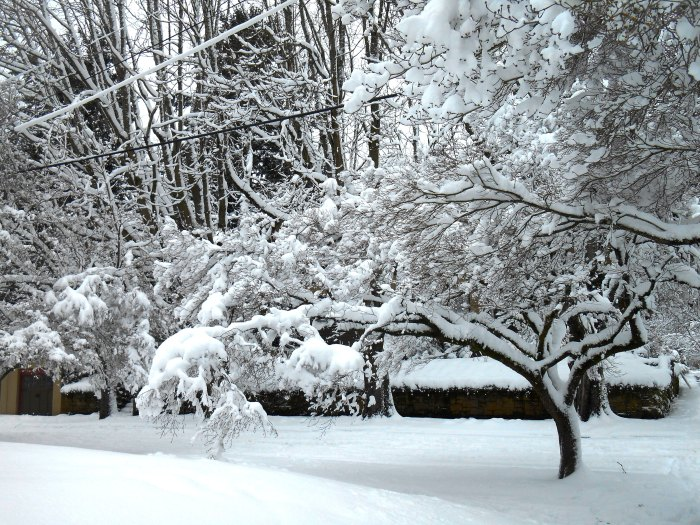 snowy-january-054