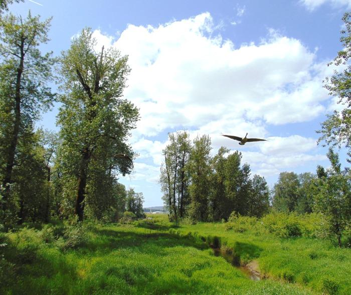 steigerwald-spring-32