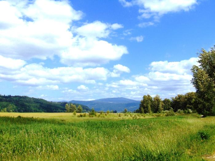 steigerwald-spring-87
