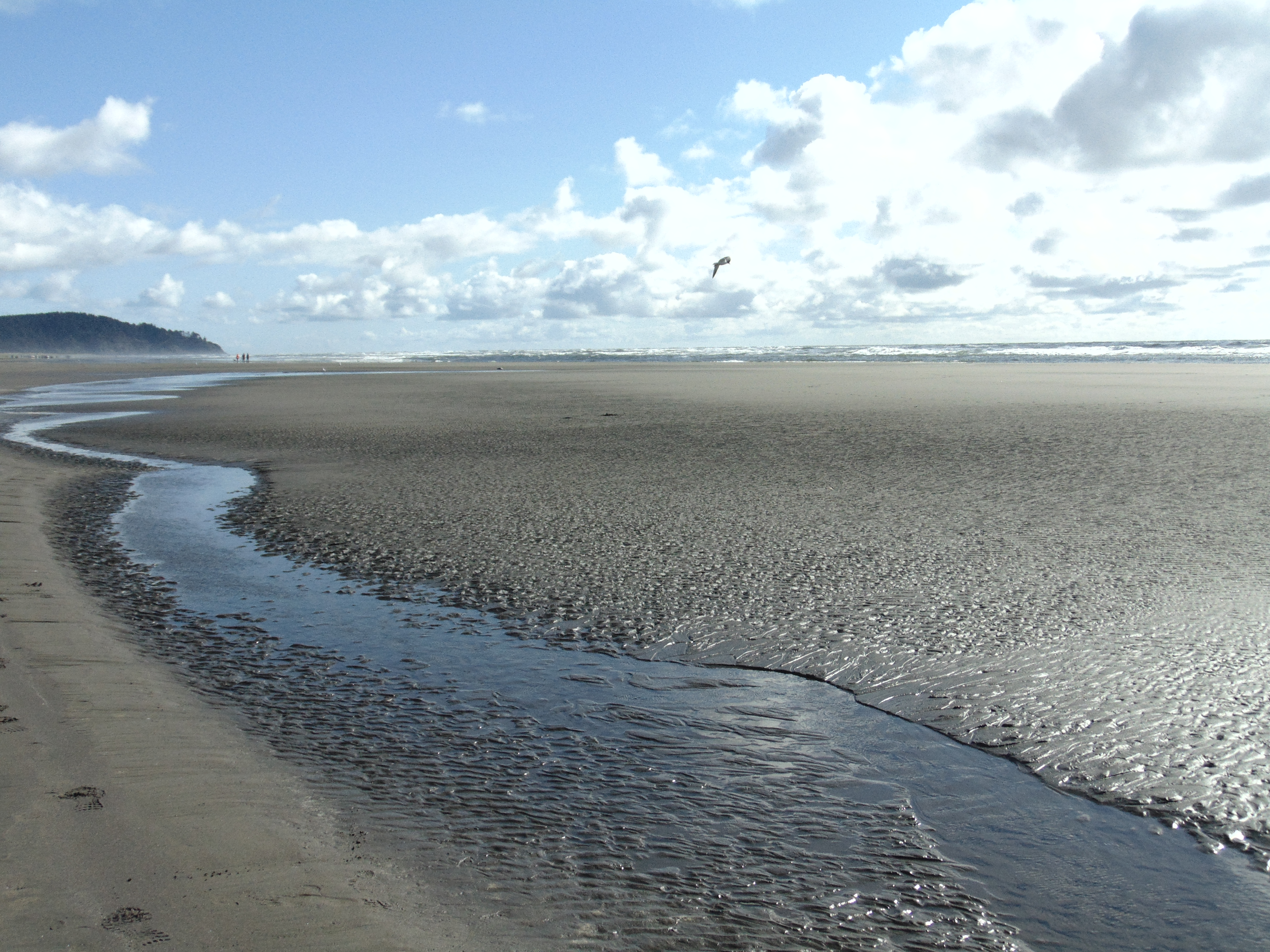 Cannon Beach-Astoria-Lg Beach, 5-17 460