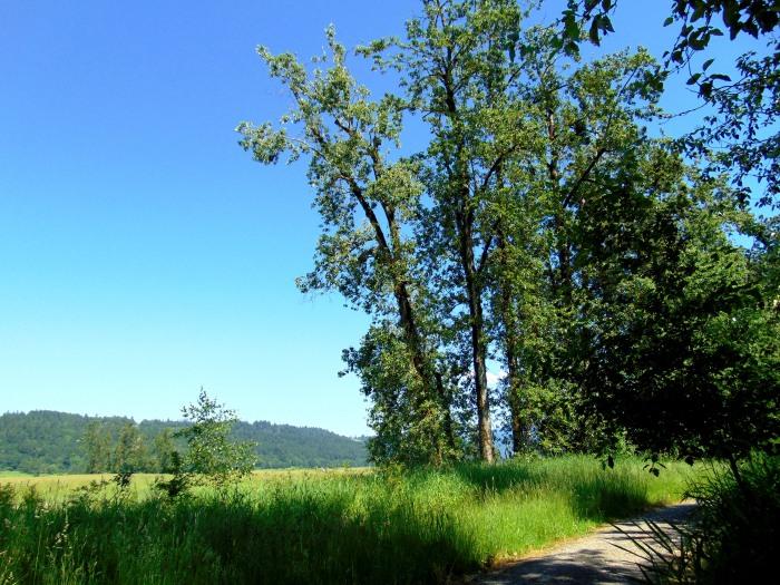 Noble Woods, Steigerwald, Vancouver Lake 100