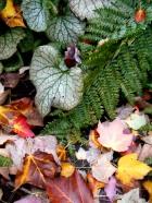 Autumn beauties 005