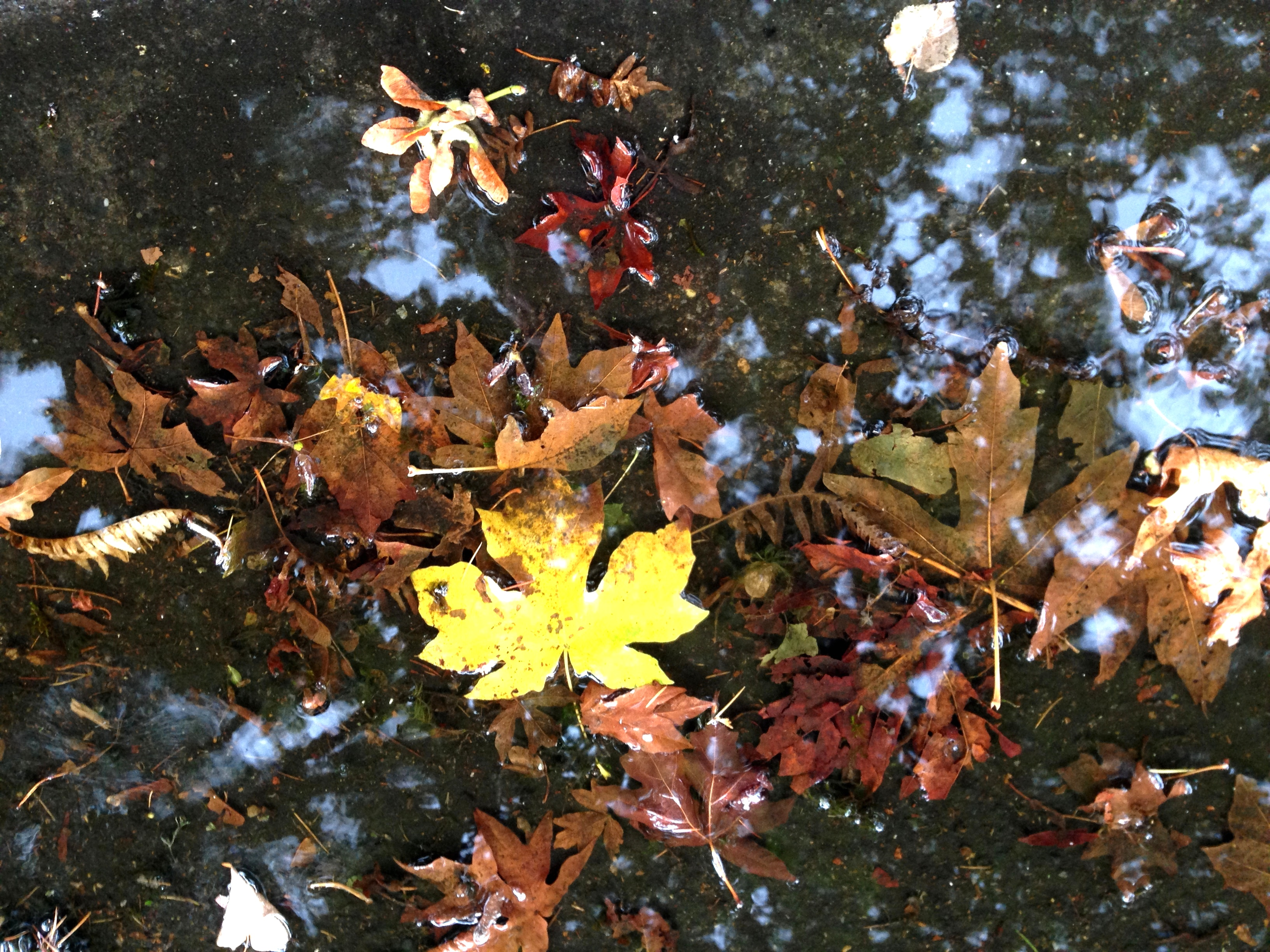 iPhone late sumer, early fall 050