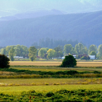 Sauvie Island Nature 086