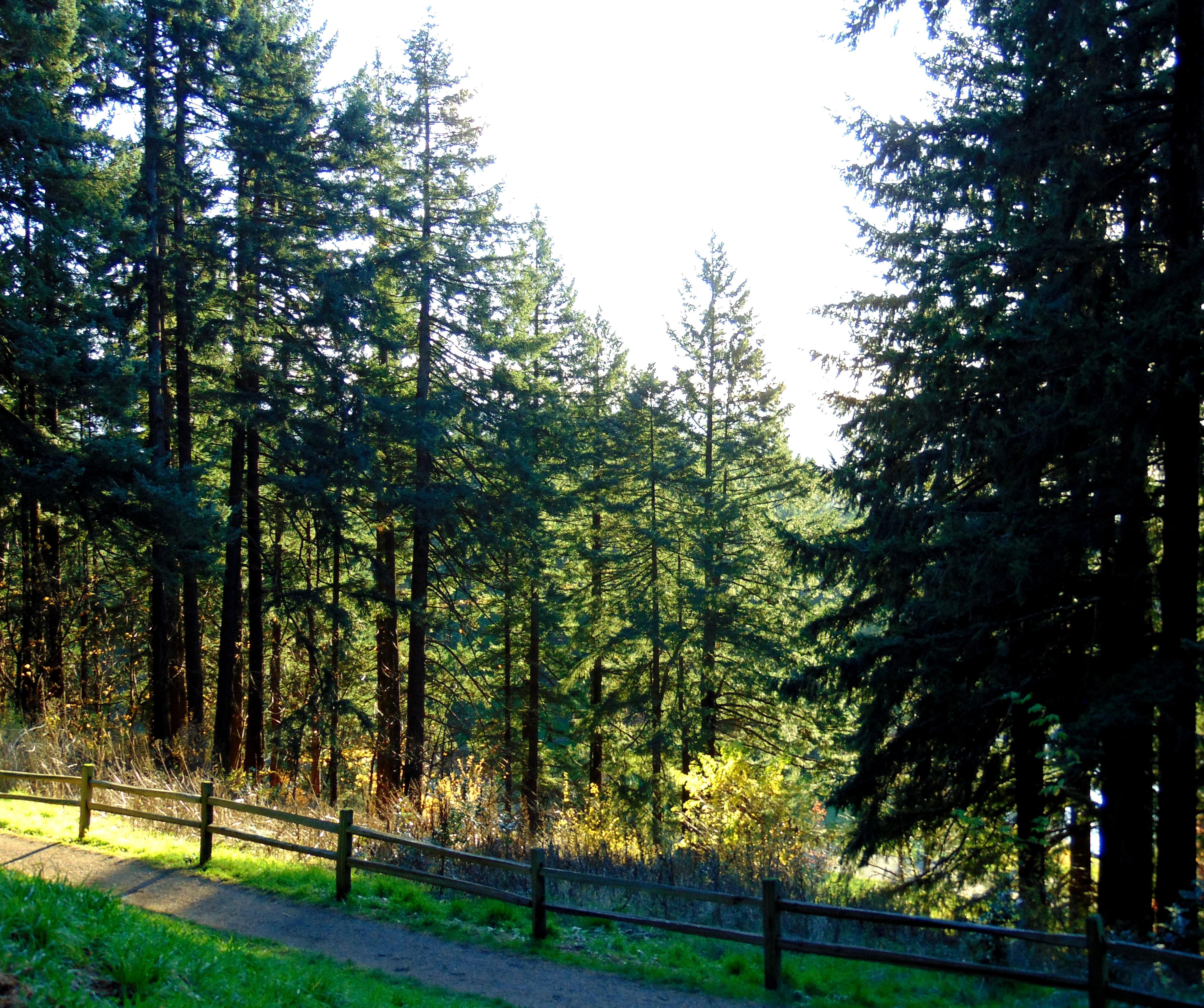 Mt. Tabor hike 074