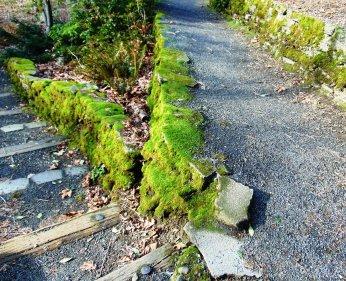 Crystal Springs, walks 011