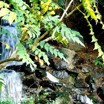 Crystal Springs, walks 138