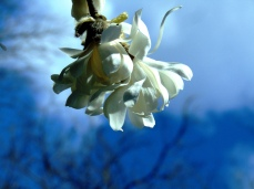 Irvington flowers, park 050