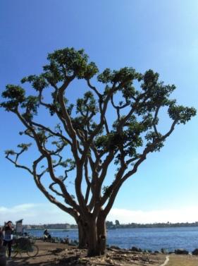 San Diego Day 1, 2 178