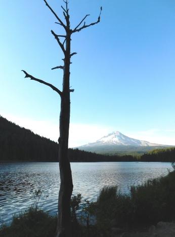 Trillium Lake, walks 298