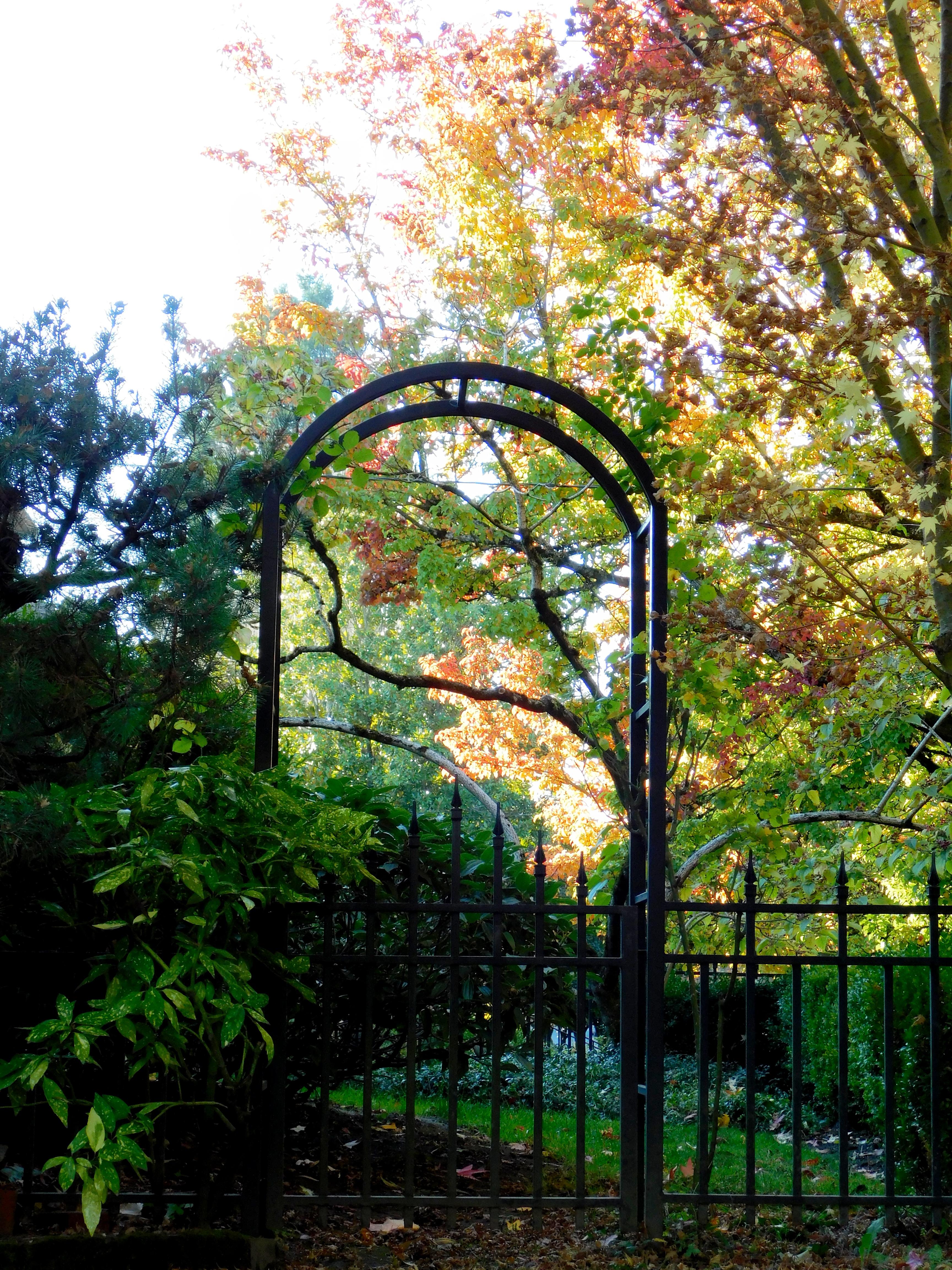 last autumn leaves 032